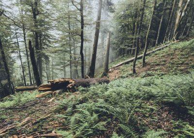 Mystischer Urwald