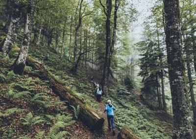 Urwald Wanderung in St. Martin