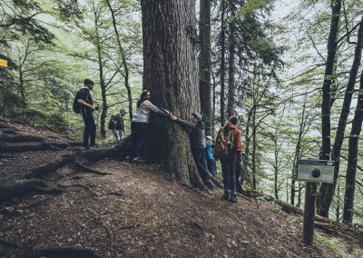 Umarmung eines Baumes
