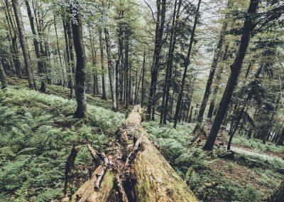 Urwald in St. Martin am Tennengebirge